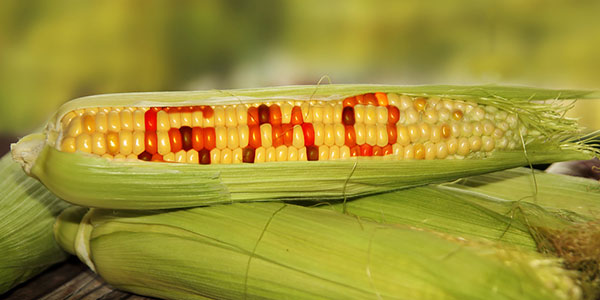 The GMO Labeling Issue and Why It Matters to You