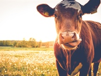 The Benefits of Grass-Fed Whey Protein