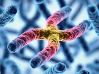 Telomeres and Exercise: How Much Is Enough?