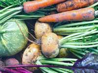 The Mega Benefits of Root Vegetables & How to Use