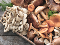 Are Mushrooms Good for You? Mushroom Nutrition & More